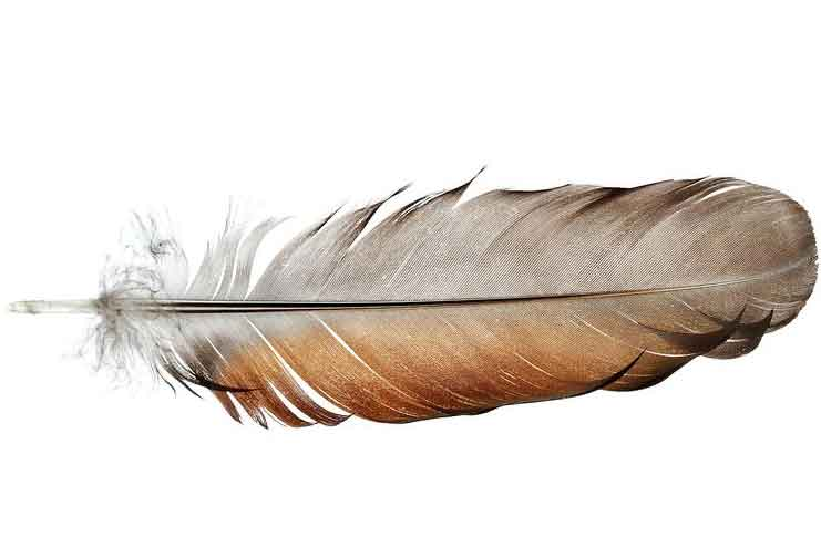Feather-Blow