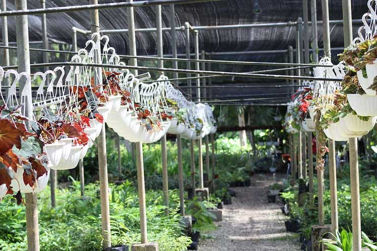 Make-a-hanging-baskets
