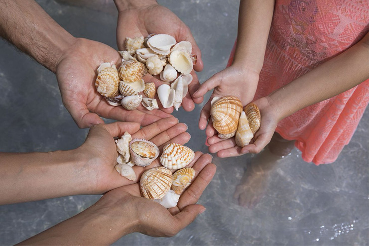 Collect-shells-and-stones