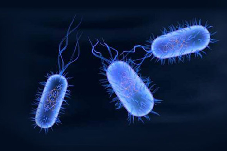 What-is-Typhoid-Fever